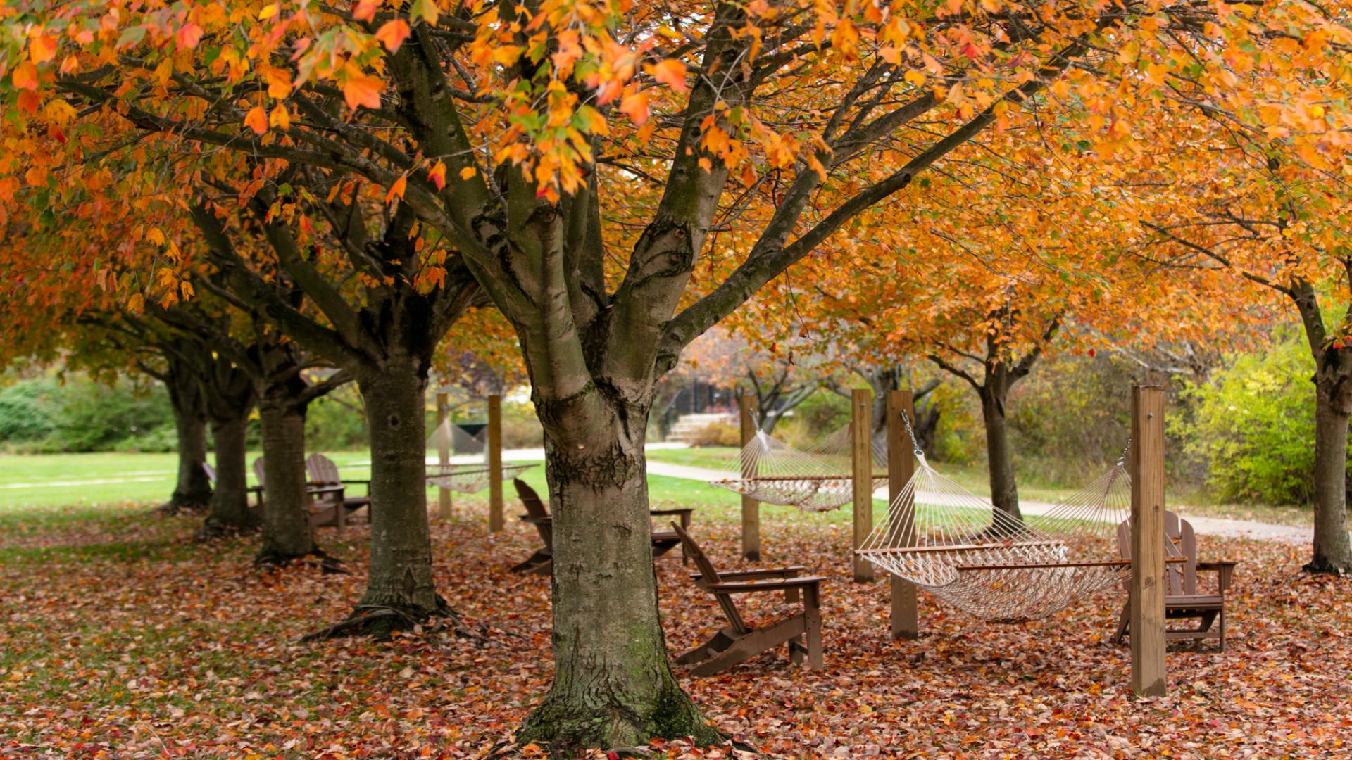 Hammock on campus in fall