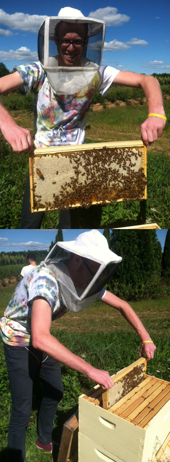 Images of Beehives at Rider University