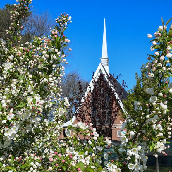 View of Gil Chapel beyond a tree in bloom