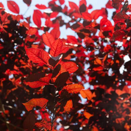 Photo Gallery Background with Autumn Leaves
